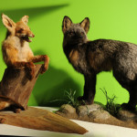 Why I Am Not a Taxidermist