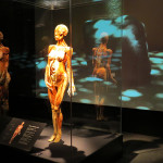 The Idea behind Plastination