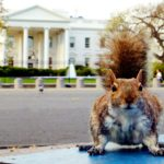 The Government's Surprising History of Squirrel Population Engineering