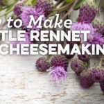 How-To-Make-Thistle-Rennet-For-Cheesemaking2_header_01